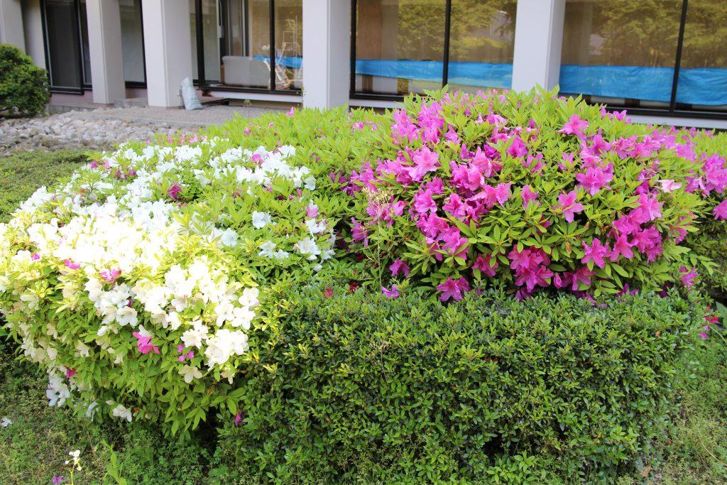 中庭のお花
